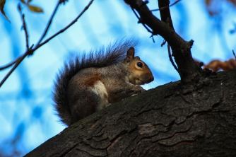 Hyde Park autumn (10)