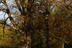 Hyde Park autumn (11)