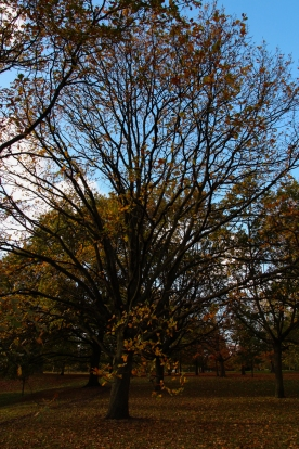 Hyde Park autumn (12)
