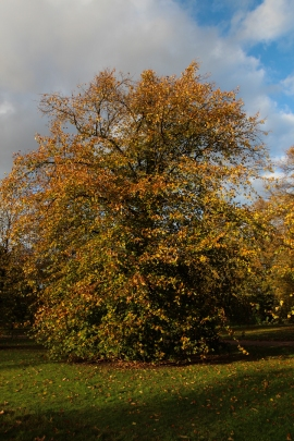Hyde Park autumn (14)