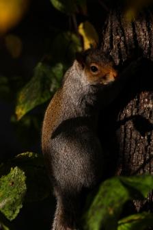 Hyde Park autumn (17)