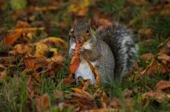 Hyde Park autumn (18)