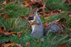 Hyde Park autumn (19)
