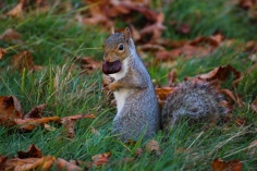 Hyde Park autumn (19)