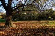 Hyde Park autumn (2)