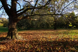 Hyde Park autumn (2)