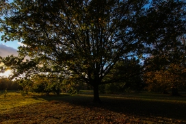 Hyde Park autumn (20)