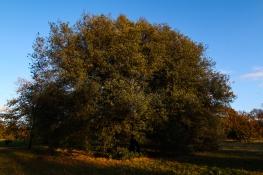Hyde Park autumn (21)