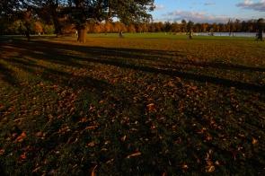 Hyde Park autumn (22)