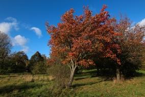 Hyde Park autumn (4)