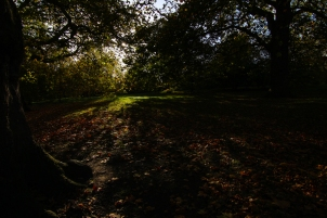 Hyde Park autumn (5)
