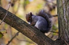 Hyde Park autumn (6)