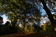 Hyde Park autumn (7)
