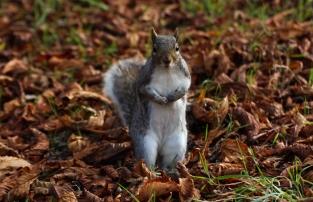 Hyde Park autumn (8)